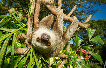 Encounter sloths during your adventurous Animal Trek at Discovery Cove.